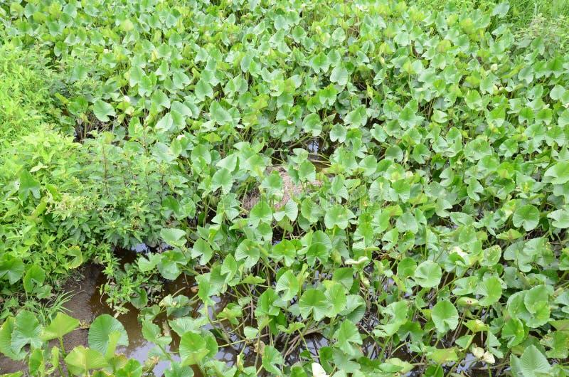 Grå färger slingrade rullat ihop upp att sova med gröna växter och vatten arkivfoton