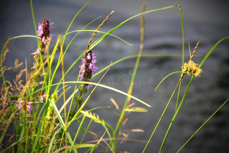 Grå färgvatten och blommor fotografering för bildbyråer