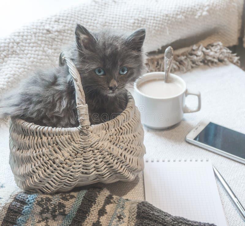 Grå fluffig kattunge i en korg, kopp kaffe och en telefon på en vit yttersida royaltyfria foton