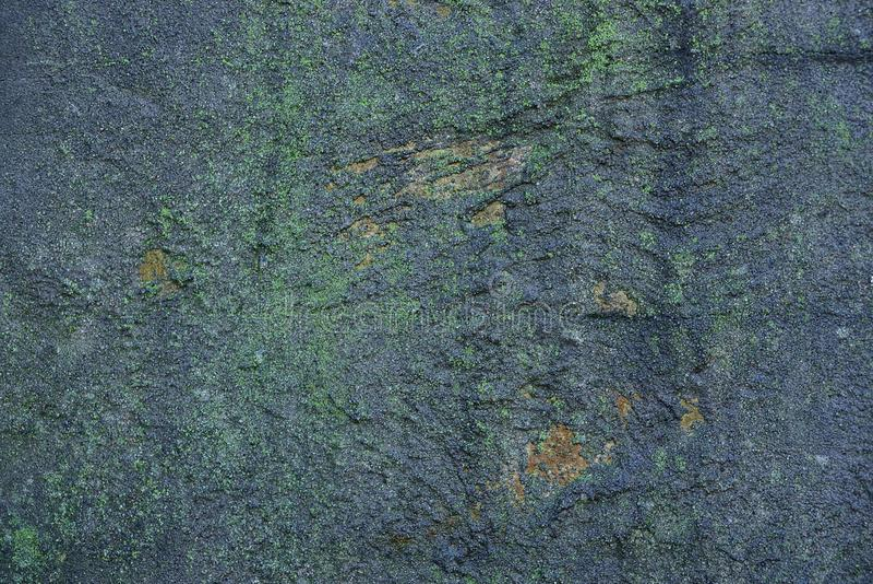 Grå grön bakgrund från ett fragment av en våt betongvägg royaltyfri foto