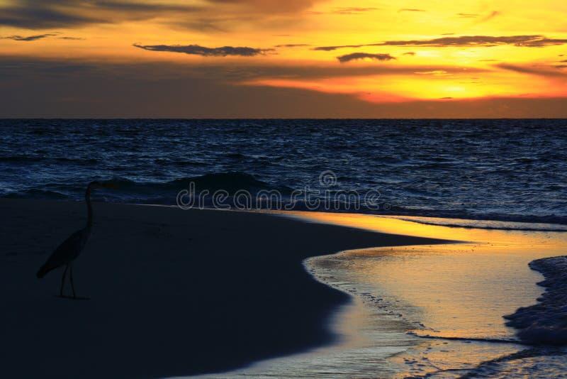 Grå häger i solnedgång royaltyfri bild