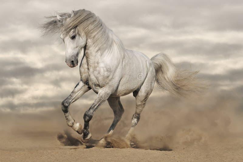 grå hästsilver för öken arkivbilder