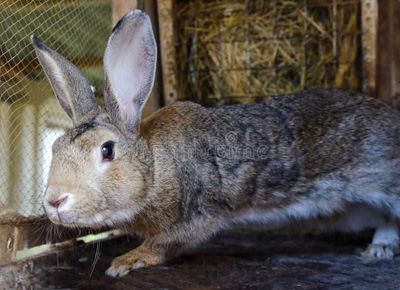 Grå kanin i en bur royaltyfri fotografi