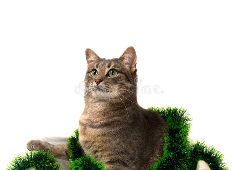 Grå katt med gröna ögon som sitter i korg med julglitter royaltyfri foto