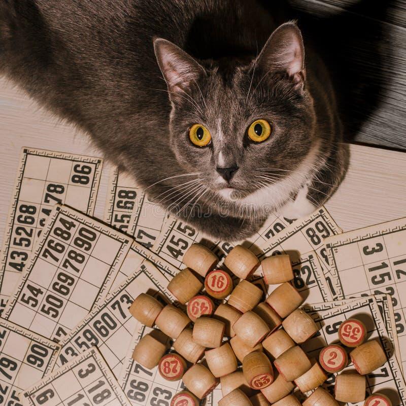 Grå katt och bingo Gammal lottolek för Tabletop med katten royaltyfri fotografi
