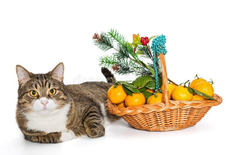 Grå kattjulkorg av mandariner royaltyfri fotografi