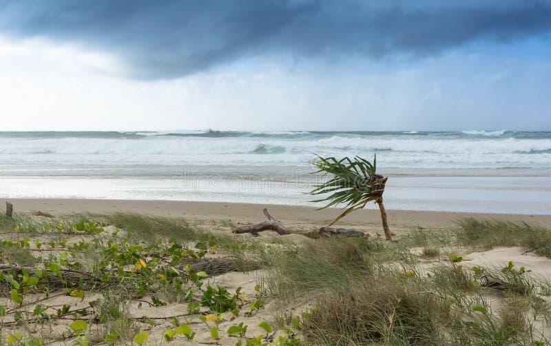 Grå molnig himmel och stormigt hav på stranden för storm med den ensamma palmträdet, Byron Bay Australia royaltyfri fotografi