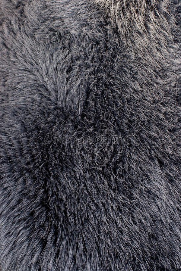 grå polar textur för blå rävpäls arkivbild