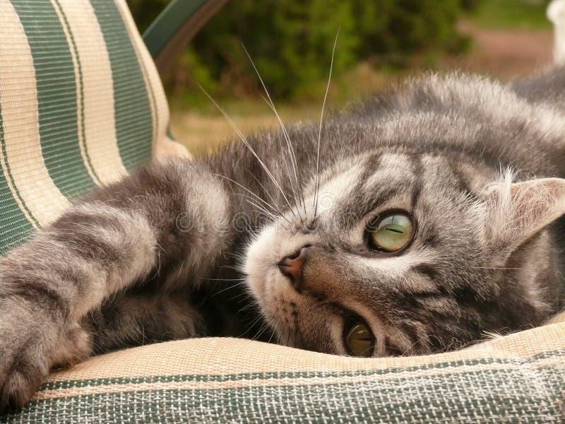 Grå strimmig kattkattunge på stol arkivfoton