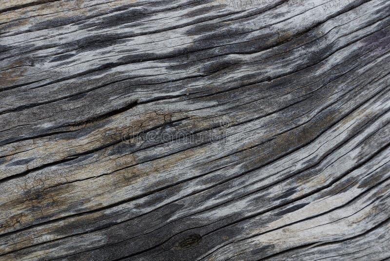 Grå svart naturlig textur av torrt trä fotografering för bildbyråer