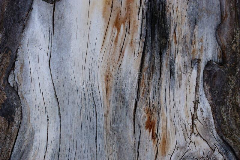 Grå trätextur av torrt gammalt trä med svarta sprickor arkivbild