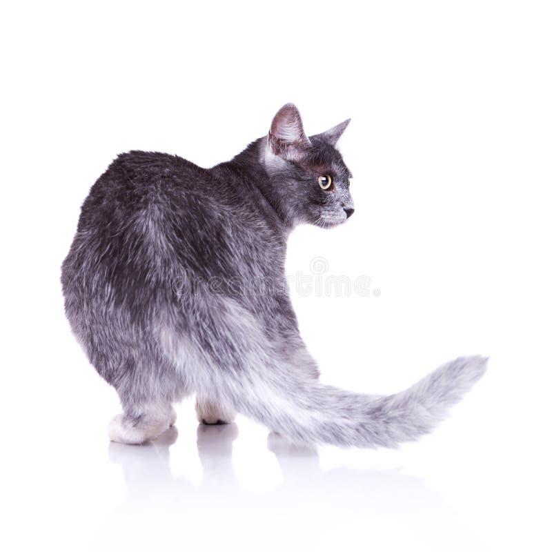 grå trevlig sikt för tillbaka katt arkivfoto