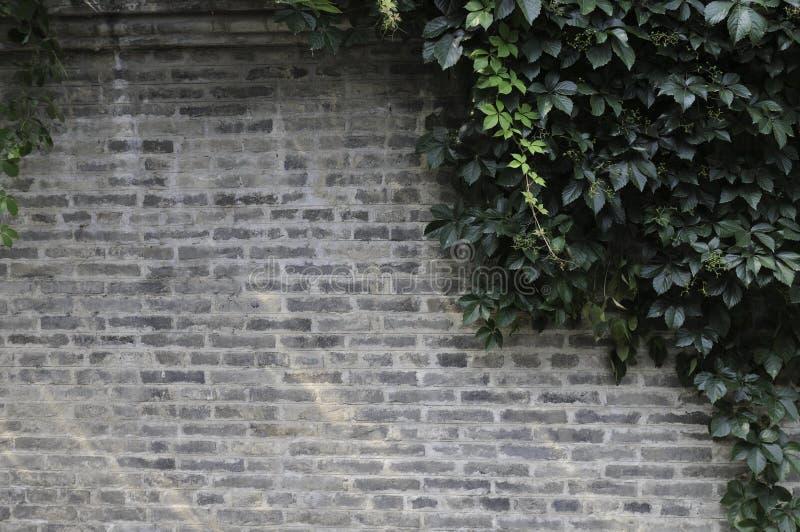 grå vägg royaltyfri bild
