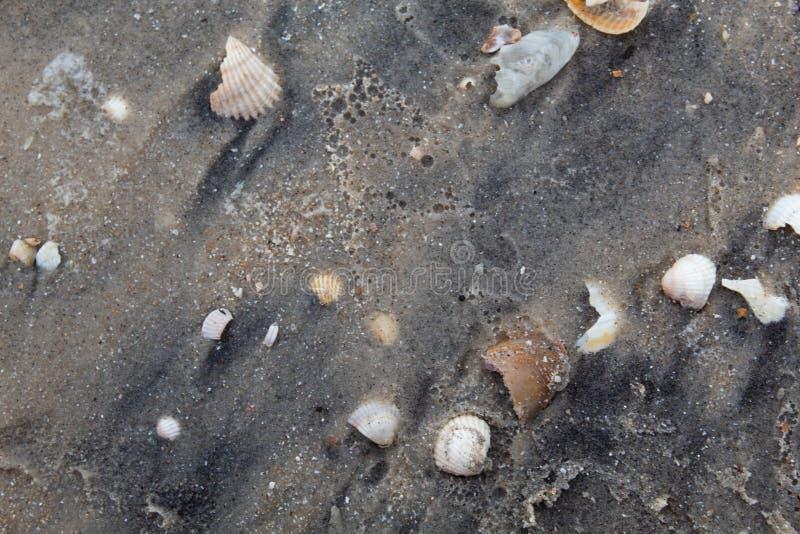 Grå våt sand med skal av olika färger och format fotografering för bildbyråer