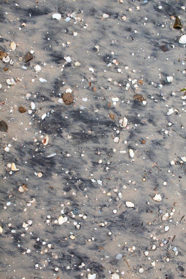 Grå våt sand med skal av olika färger och format arkivfoto