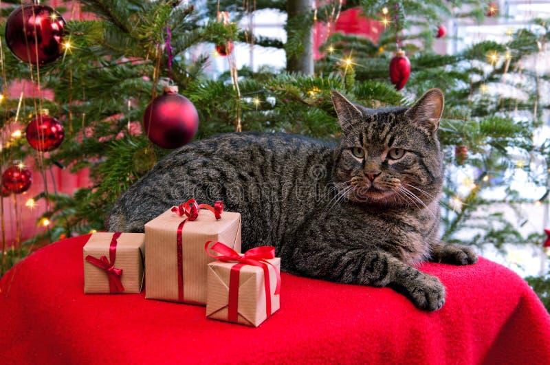 Gråa katt- och julgåvor royaltyfria bilder