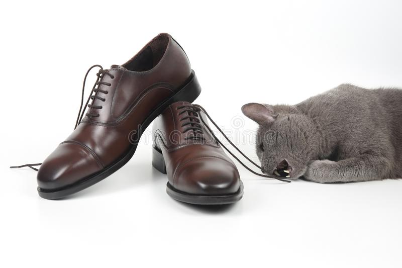 Gråa kattlekar med en klassiker snör åt skon för brunt för man` s på vitbac arkivbilder