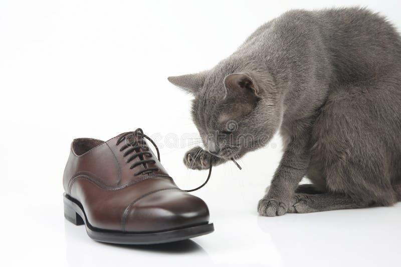 Gråa kattlekar med en klassiker snör åt skon för brunt för man` s på vitbac arkivbild
