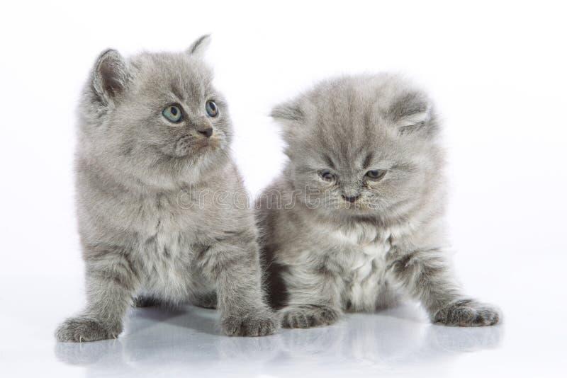 gråa kattungar lilla två arkivfoto