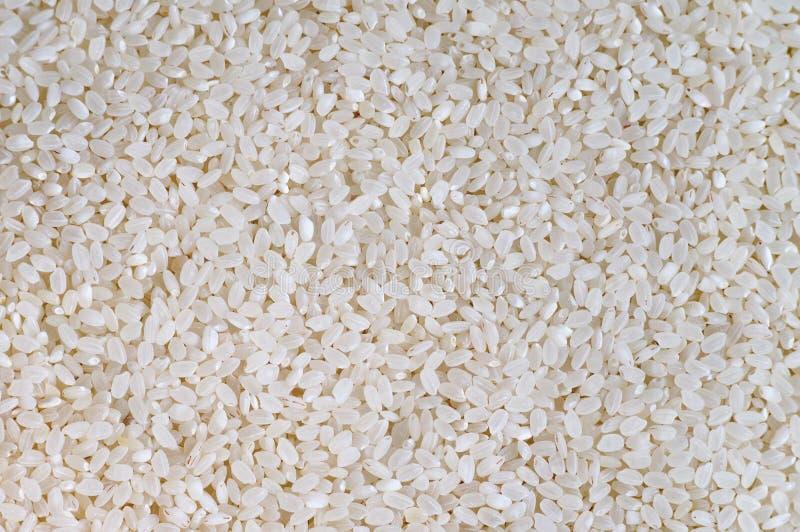 Grões curtos do arroz branco cru do italica imagem de stock