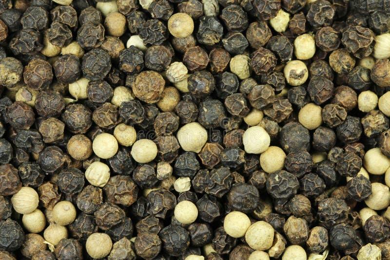 Grões da pimenta preta imagens de stock royalty free