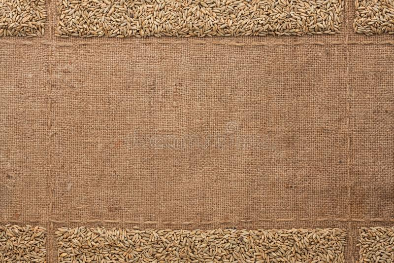 Grões de Rye na serapilheira, com lugar para o texto Vista superior imagem de stock royalty free