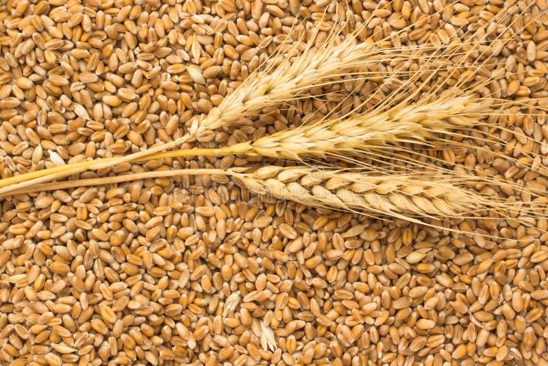 Grões do trigo e dos spikelets do trigo Vista superior fotografia de stock royalty free