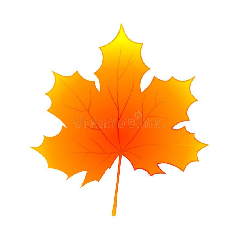 Größe des Bildes XXXL Herbst-Ahornblatt getrennt auf weißem Hintergrund stock abbildung