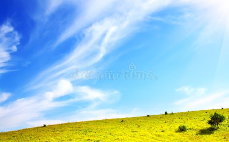 grön äng royaltyfri fotografi