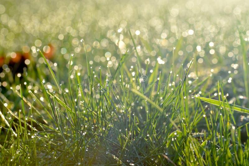 Grön äng med morgondagg och solljus från en stigningssol royaltyfri foto