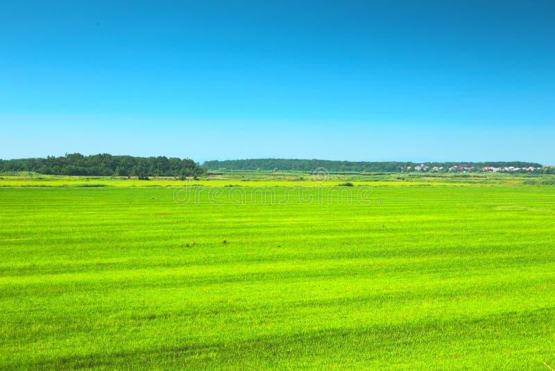 Grön äng under blåttskyen arkivbilder