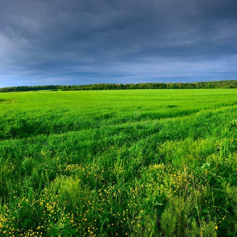 Grön äng under den blåa skyen arkivfoton