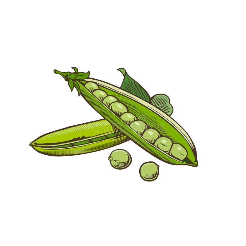 Grön ärta i tappningstil royaltyfri illustrationer