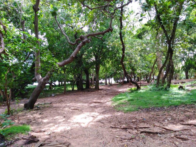 Grön ö som omges av tropiska träd för vatten royaltyfria foton