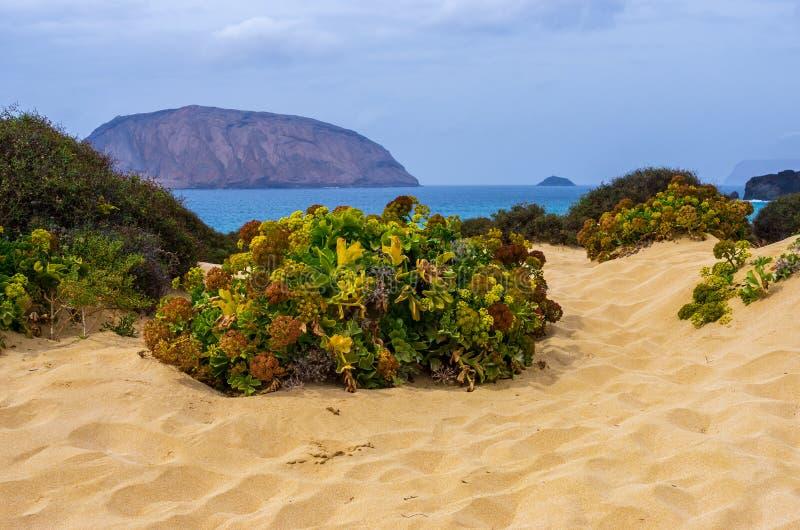 Grön ökenväxt på strandsanden fotografering för bildbyråer