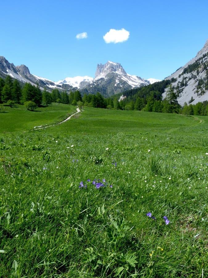 Grön alpin dal, montering Thabor, Frankrike fotografering för bildbyråer