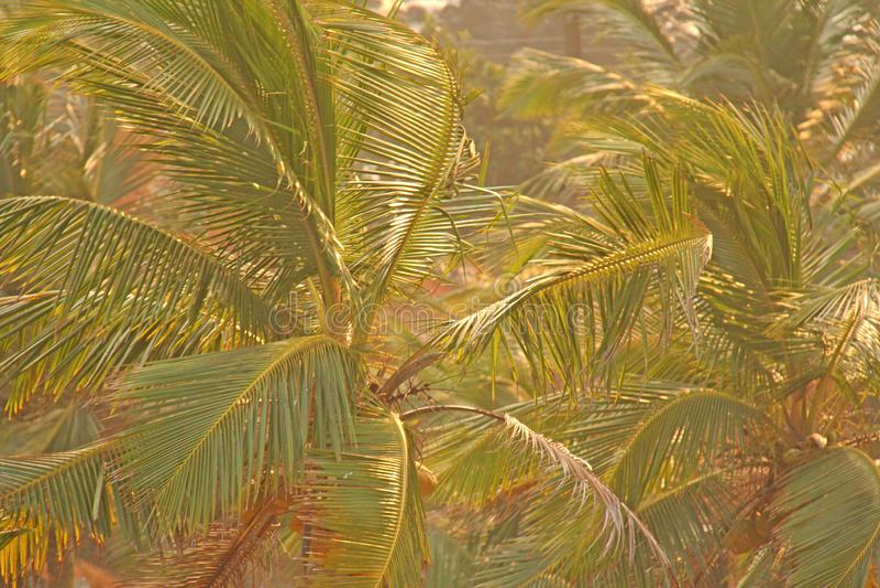 Grön bakgrund av palmträd exotiskt tropiskt för bakgrund palm royaltyfri foto