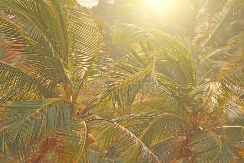Grön bakgrund av palmträd exotiskt tropiskt för bakgrund palm royaltyfria foton