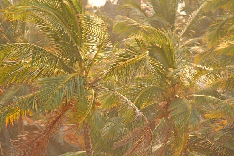 Grön bakgrund av palmträd exotiskt tropiskt för bakgrund palm arkivfoto