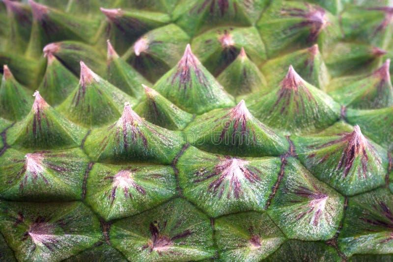 Grön bakgrund för Durianpeeltextur royaltyfri foto