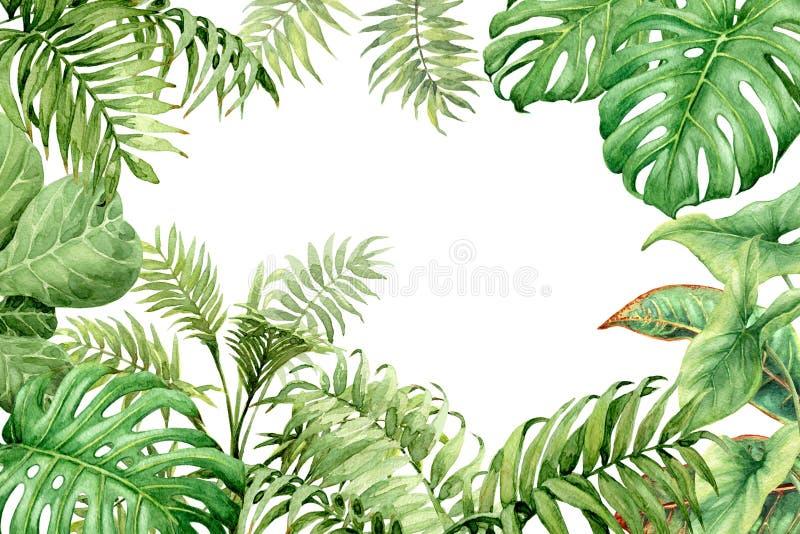 Grön bakgrund för vattenfärg med tropiska växter stock illustrationer