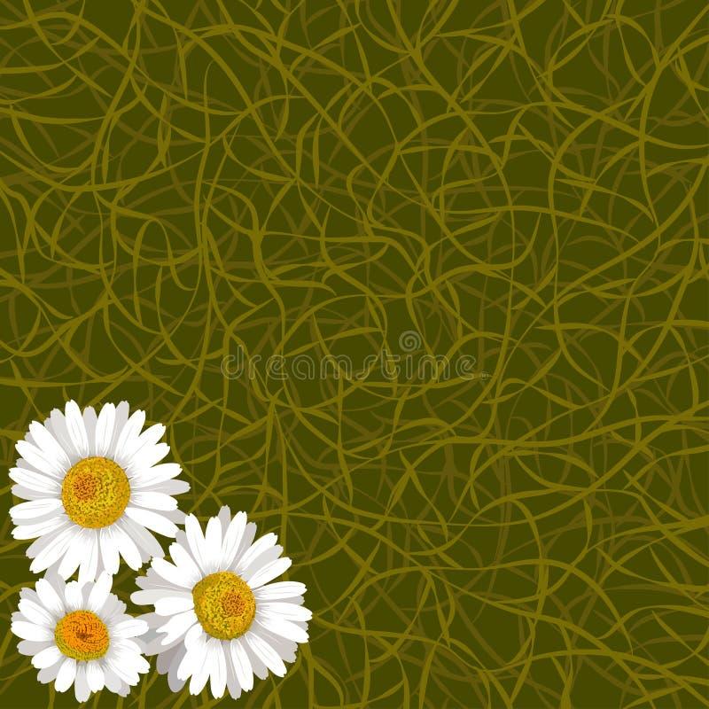 Grön bakgrund från gräs och blommor av kamomill i hörn stock illustrationer