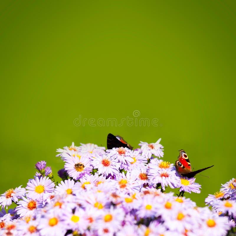Grön bakgrund med fjärilar och bin på blommor arkivfoton