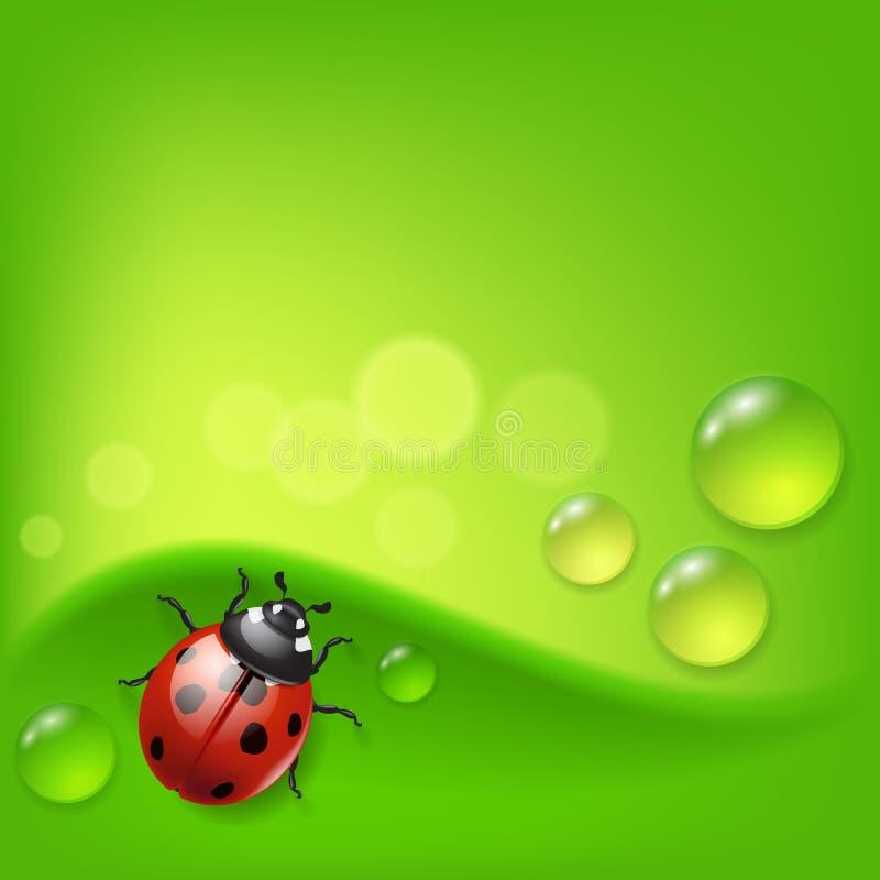 Grön bakgrund med nyckelpigan och dagg stock illustrationer