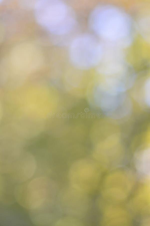 Grön bakgrund med suddig lövverk och ljust sommarsolljus arkivbild