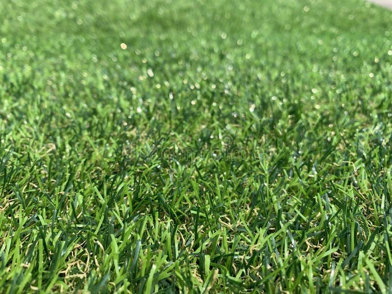 Grön bakgrundsdet normala tillbaka fotografering för bildbyråer