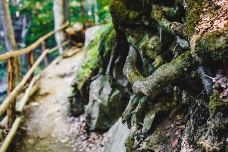 grön bana för skog royaltyfria bilder