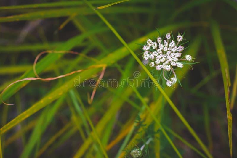 Grön beautifu; avkopplingnaturplase arkivfoton