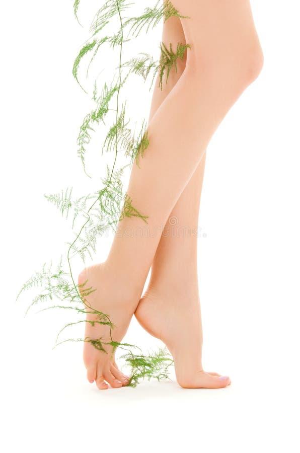 grön benväxt för kvinnlig royaltyfri foto