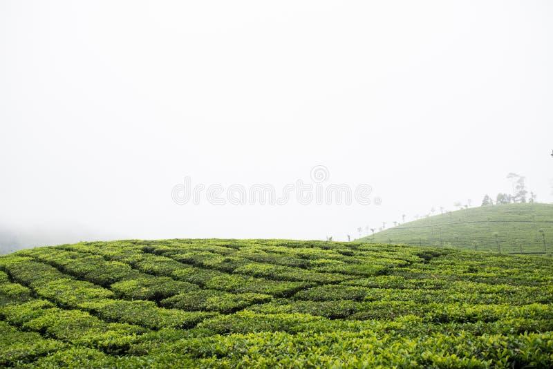 Grön bergstopp i nationalpark royaltyfria bilder